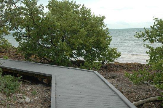 Elliott Key Campground: Ocean side boardwalk.