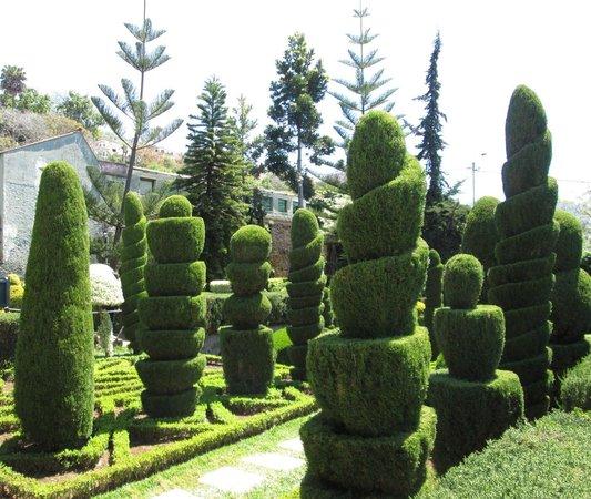 Madeira Botanical Garden : Incredible topiary