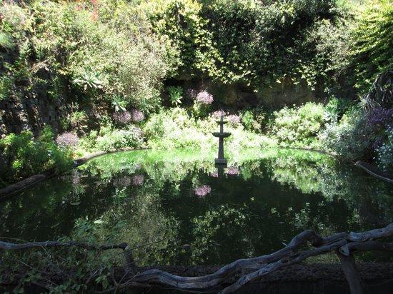 Madeira Botanical Garden : Calming pool