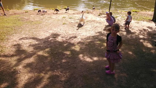 Stroud's Restaurant & Bar : Geese and a swan by the lake