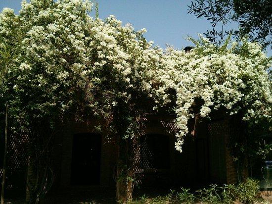 Riad Jawad: Room