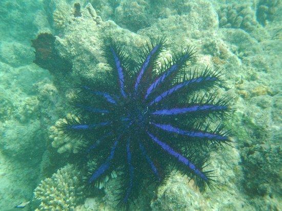 Aloita Resort & Spa : Mergulho no entorno da ilha