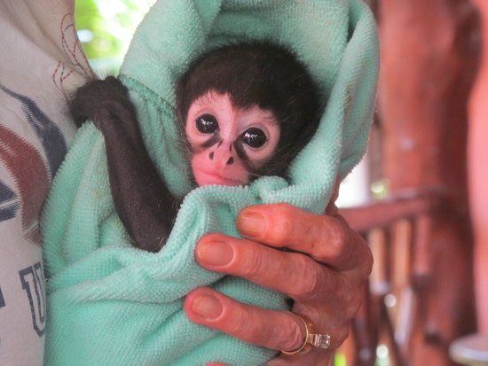 The Jungle Place - Tours: Pretty little baby!