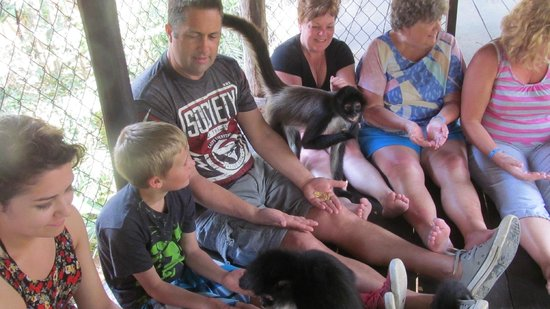 The Jungle Place - Tours: Communing with the monkeys!
