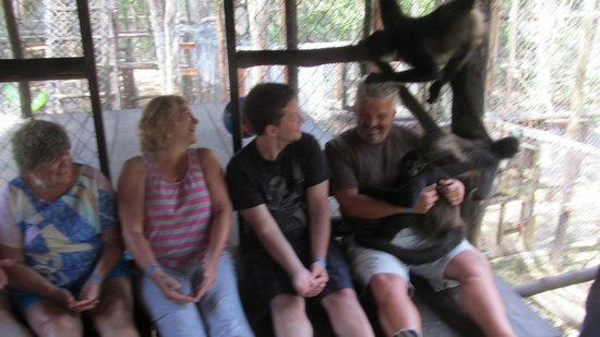 The Jungle Place - Tours: King of the Monkeys!