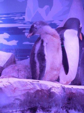 SEA LIFE London Aquarium: baby penguin
