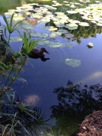 Ramada Santa Barbara: Lotus Garden