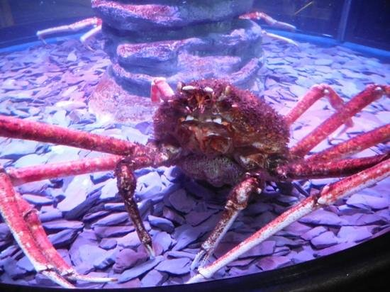Sea Life London Aquarium: crab