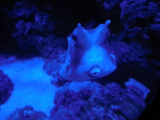 Sea Life London Aquarium: fish