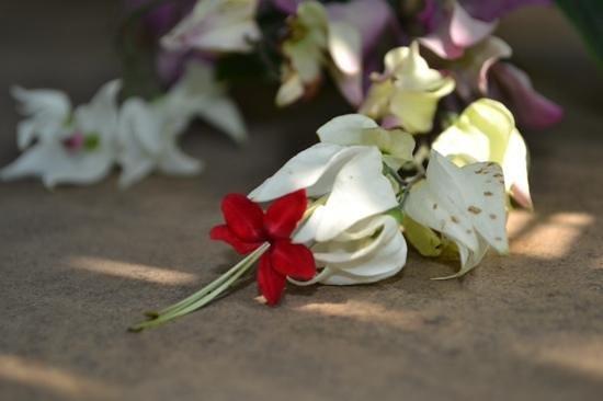 Royal Botanic Gardens Kew: Flower