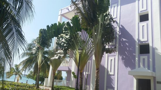 Hotel Riu Montego Bay: landscaping and hotel buildings