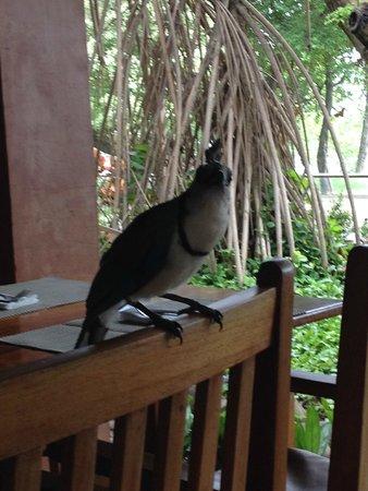 Hotel Capitan Suizo : wild life