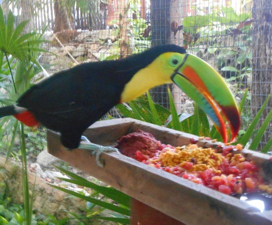 Iberostar Tucan Hotel: Colorful Toucan