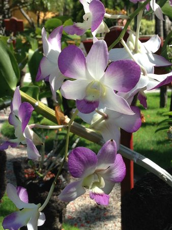 Iberostar Bavaro Suites: Orchid Garden