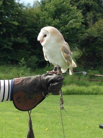 The Barn Owl Centre : Barn owl centre