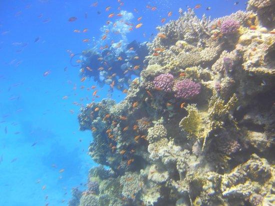 Tiran Island : Погружение