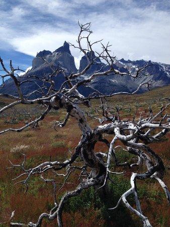 "Hotel del Paine: Natureza ""morta"", resultado do incêndio florestal de 2009"