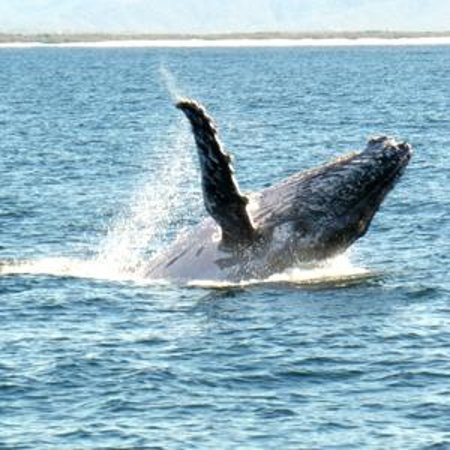 Whales in Paradise - Gold Coast Whale Watching Pty Ltd : Whales In Paradise