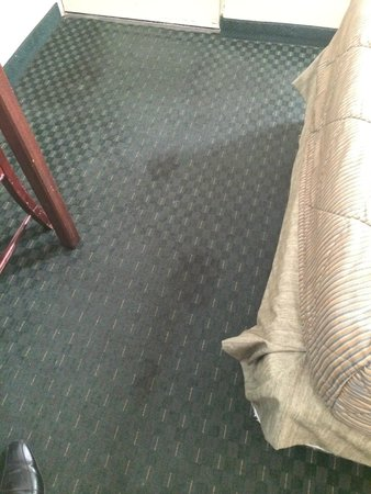 Mission Valley Resort: Dirty carpet