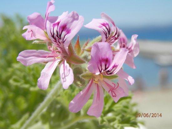 Palmariva  Beach Bomo Club : macro