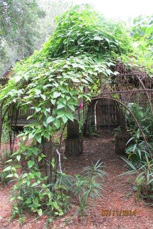 The Children's Garden : Enchanting Garden Vine