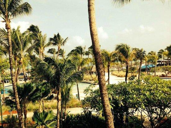 Hilton Aruba Caribbean Resort & Casino: Palmas