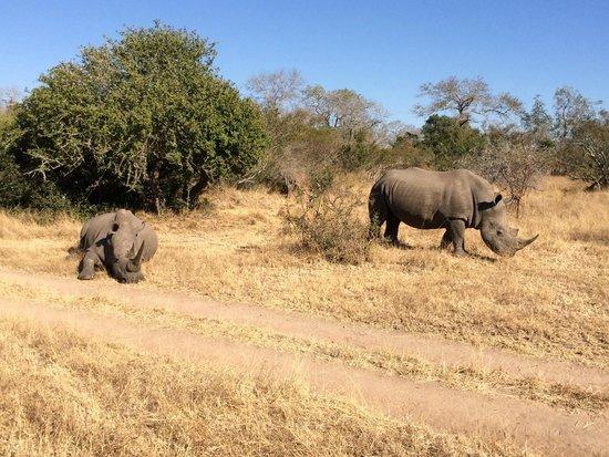 Lion Sands River Lodge: Rhinos