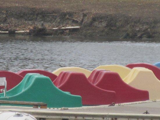 Shoreline Lake Boathouse: Paddle Boats, Shoreline Park, Mountain View, CA