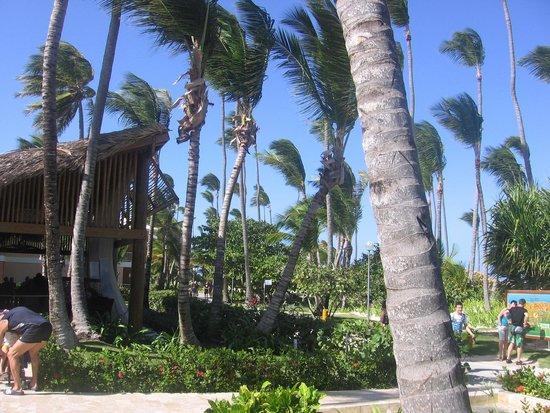 Grand Palladium Punta Cana Resort & Spa: GPPC