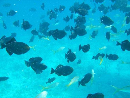The Venetian on Grace Bay: snorkeling!!!