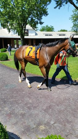 Arlington Park: Watchin the horses warm up to race