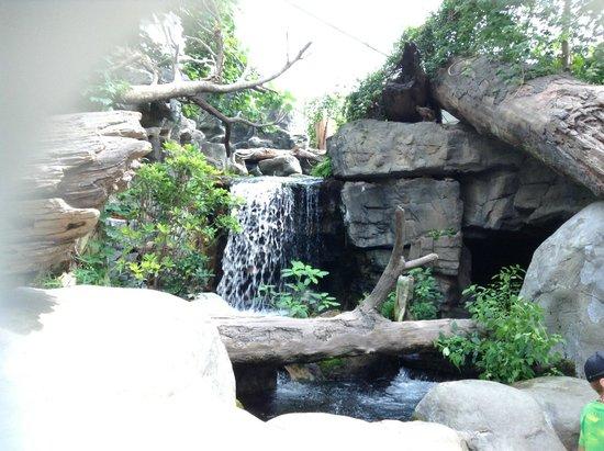 Tennessee Aquarium: Peaceful