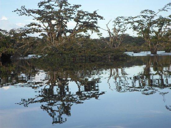 Cuyabeno Lodge: La laguna
