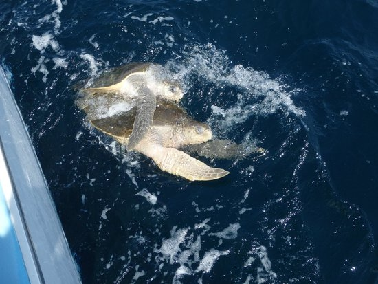 Blue Dolphin Sailing : Turtle Porn: Because when you view it in person its nature. When you take of picture of it, its
