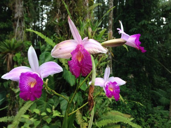 Arenal Observatory Lodge & Spa : Incredible flora on the grounds of the lodge
