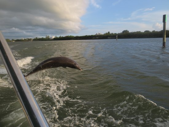 Palm Island Resort: Took the water taxi and a dolphin popped up