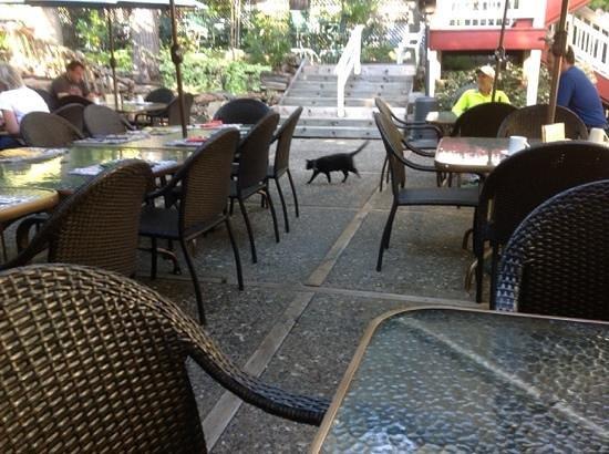 The Groveland Hotel: Momma Kitty is The Patio Hostess!!