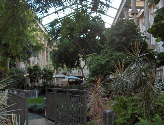 Hyatt Regency Greenwich: Lobby greenhouse/garden