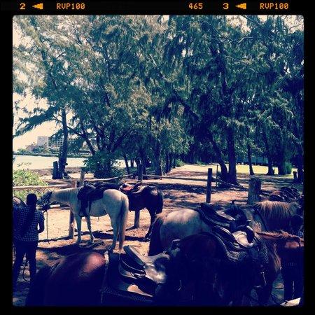 Turtle Bay Resort : Horse fun