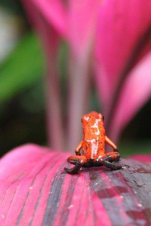 Neo Fauna: A little poison dart action.....