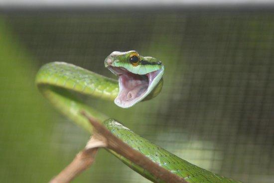 Neo Fauna: More serpenty fun