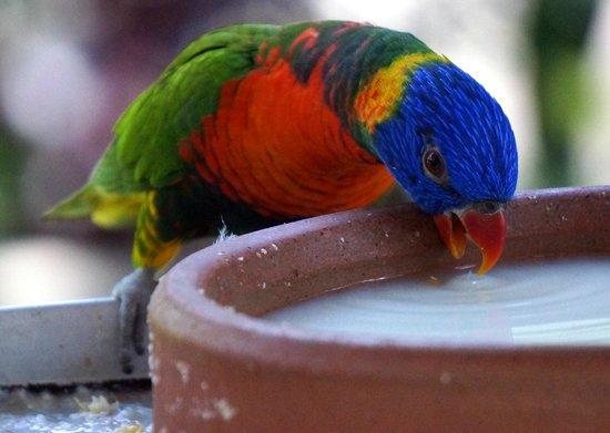 Birdworld Kuranda : Having a drink
