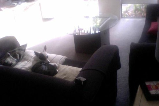 Medina Serviced Apartments North Ryde: lounge room