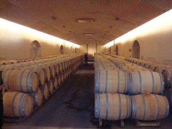 Concha & Toro: vinhos