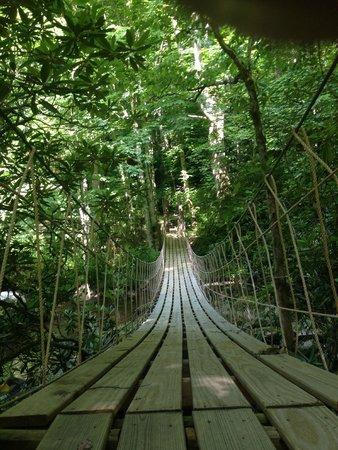 Cherokee Mountain Cabins: Swinging bridge on nature trail