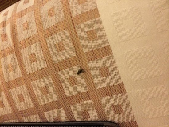 La Quinta Inn Galveston East Beach : Flies everywhere.