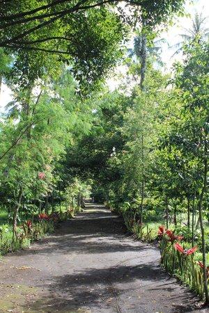 Margo Utomo Agro Resort & Cottages: plantation area