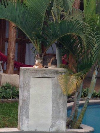 Casa Lajagua : Cat guardian