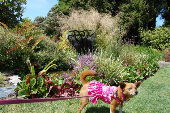 Mendocino Coast Botanical Gardens: Where else can you do this??