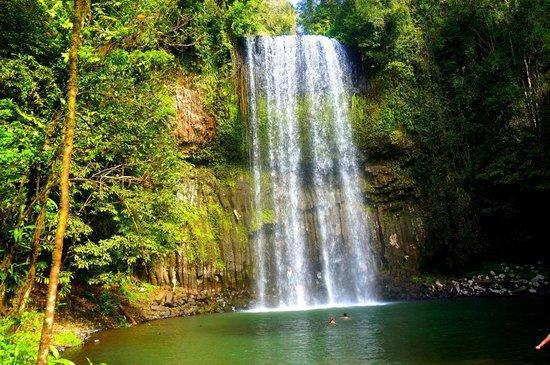 Tablelands, Waterfalls, and Spanish Castle : Millaa Millaa Falls